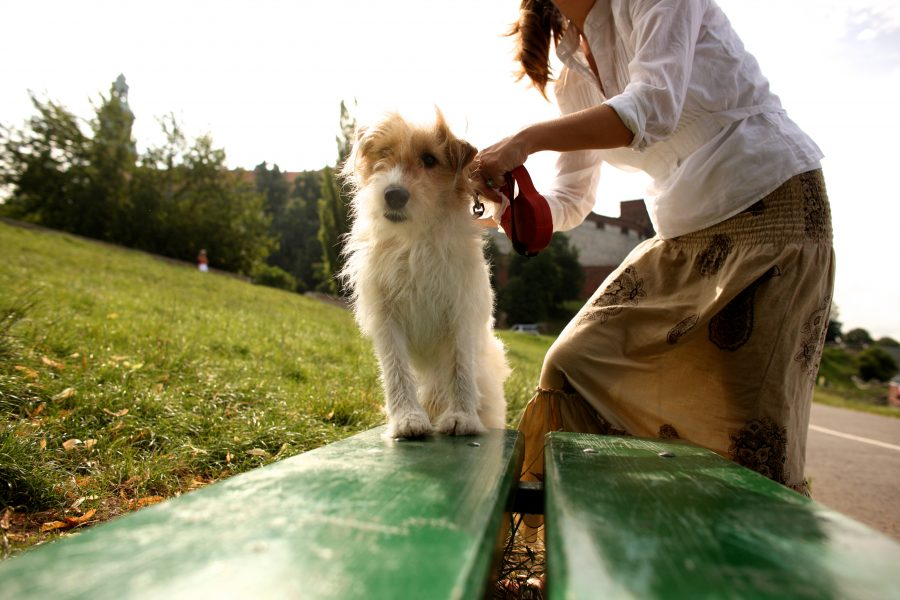 Dog on a bench with owner fastening lead