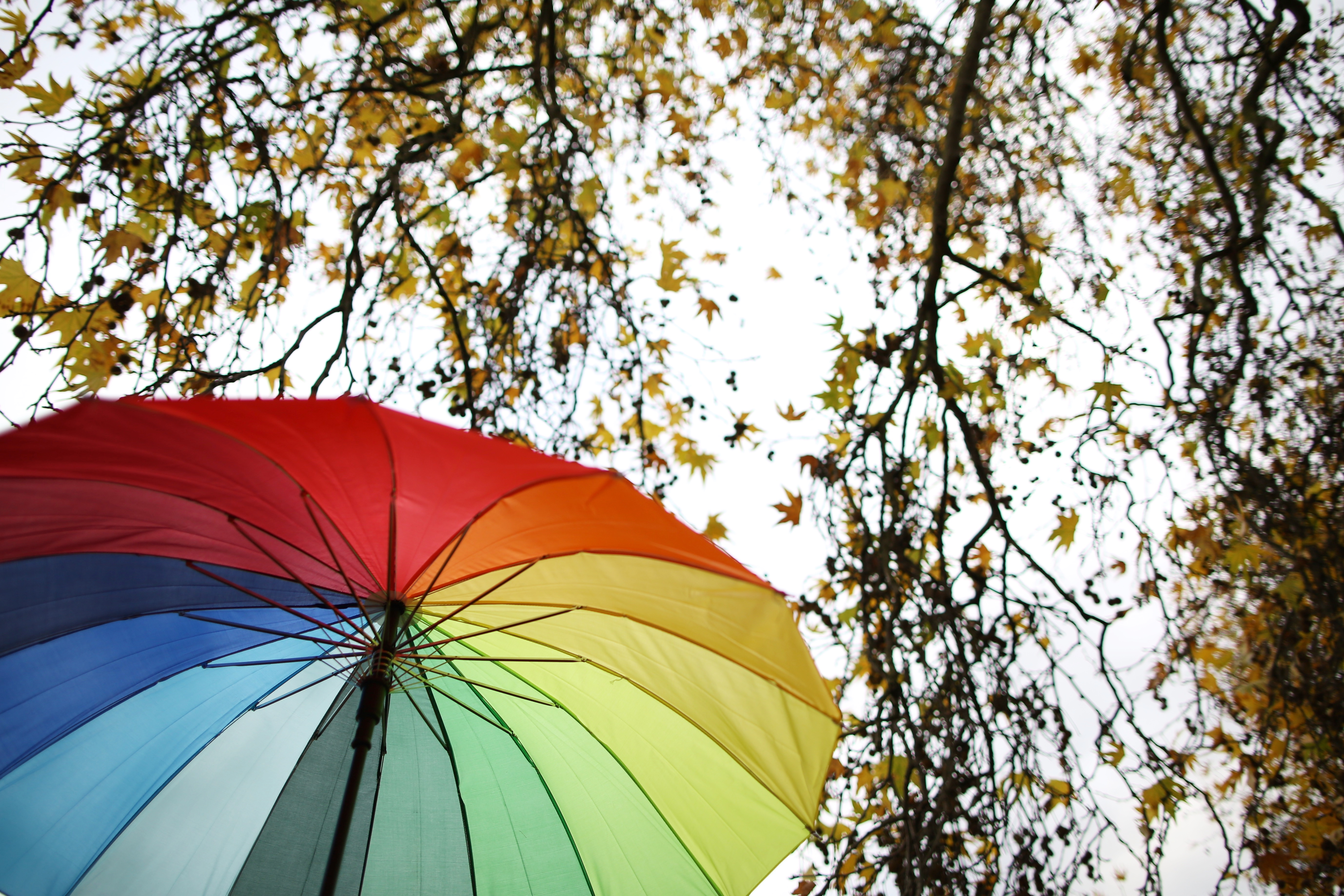Colourful umbrella under trees